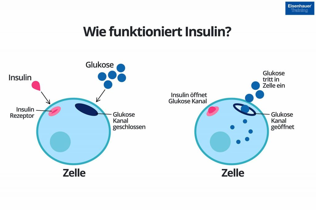 Insulin Funktionsweise in der Zelle Diagramm
